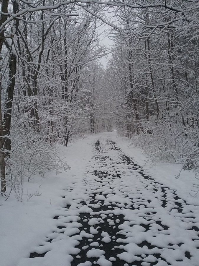 Snowfall from previous year.